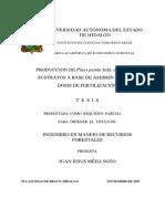 Producción de Pinus Patula Schl. Et Cham. en Sustratos a Base de Aserrín Crudo y Dosis de Fertilización