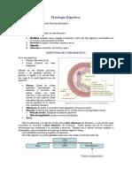 Fisiología Sistema Digestivo