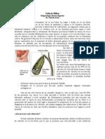 Fisiopatología Digestiva Litiasis