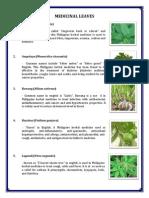 Medicinal Leaves