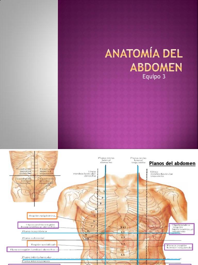 Anatomia Del Abdomen Equipo 3
