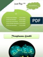 Parasitologi (Toxoplasma)