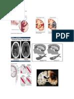 Risk Factor SH-Gambar