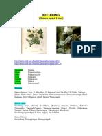 Morfologi, Anatomi, Fisiologi Datura Metel
