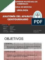 Anatomia Del Aparato Genitourinario