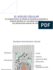 biologia celular - clase 11