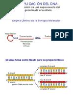 biologia celular - clase 12