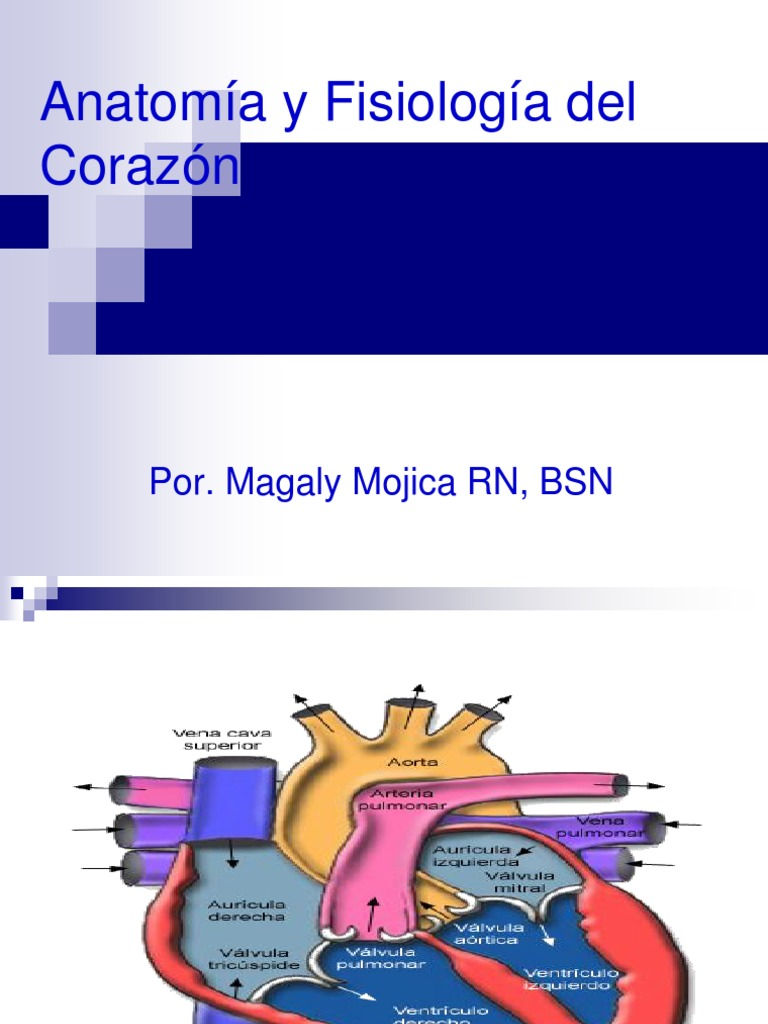 3117914-anatomia-y-fisiologia-del-corazon-111008234333-phpapp02.ppt