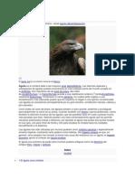 Águila.docx