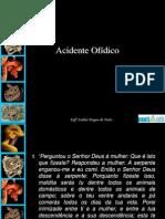 acidente_ofidico