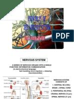 Week 1 - 1. Principles of Nervous System
