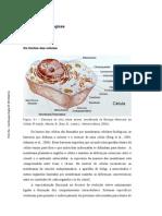 A Fluidez Da Membrana Plasmática