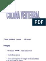 Colunavertebral Mand