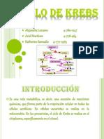 bioquimica ciclo de krebs