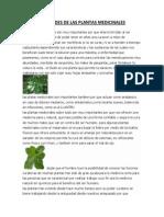 Utilidades de Las Plantas Medicinales