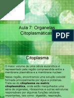 Aula 7 organelas citoplasmáticas