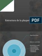 Estructura de la plaqueta.pptx