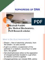 Gel Electrophoresis of DNA