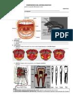 Resumen Científico-componentes Del Sistema Digestivo