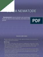 Clasa Nematode