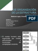 Niveles de Organización de La Estructura Humana