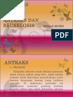 Zoonosis Kausa Bakteri Antraks Dan Bruselosis