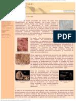 Huellas y Trazas - Museo Virtual de Fósiles Patagónicos