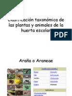 Clasificación Taxonómica de Las Plantas y Animales De