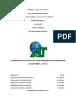 Informe Del Frijol