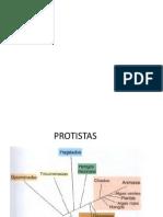 07_Protistas