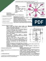 Clase 8 Endocrino3.pdf