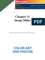 endocrine images