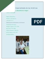 informe de lab  n 1