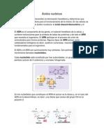 Acidos Nucleicos Adrian