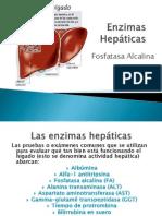 Enzimas Hepáticas (Fosfatasa Alcalina)