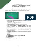 Lp 6 Vibrio, Pseudomonas, Helicobacter