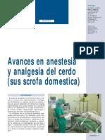 Anestesia Cerdo