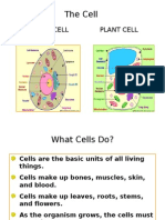 cell structure 9th April