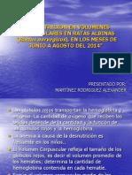 Desnutricion en Volumenes Corpusculares en Ratas Albinas