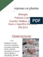 Hidrotropismo en Plantas2 (2)