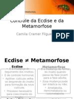 Controle Da Ecdise e Da Metamorfose