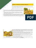 La Revolución Agrícola y Su Influencia en Las Primeras Civilizaciones