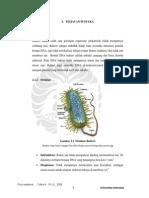 Bakteri