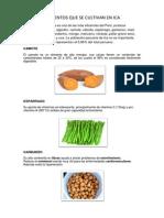 Alimentos Que Se Cultivan en Ica