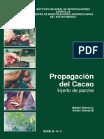 Propagación Del Cacao Injerto de Parche