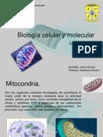 Biología Celular y Molecular (Tema VI Mitcondria)