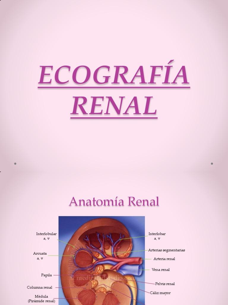Sistema Renal .Eco