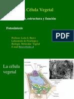 Cloroplasto Estructura y Funcion