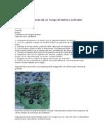 Hongos Cómo Tomar Esporas de Un Hongo Silvestre o Cultivado