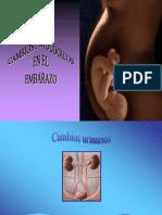 Cambios Fisiologicos Del Embarazo